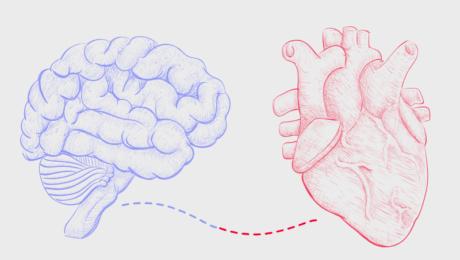 De la inimă la creier și invers. Sau cine a fost mai întâi, oul sau găina?