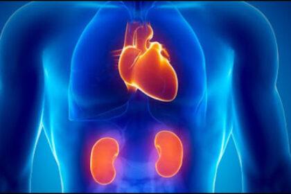 Hipertensiunea arterială esențială (HTAE) și afectarea renală